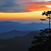 Tree's silhouette by Nora Carol