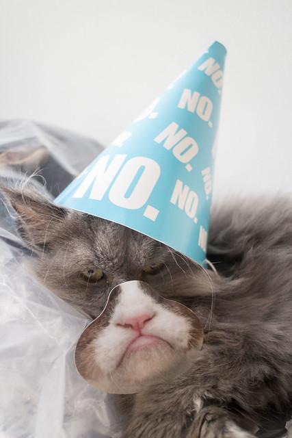 Grumpy Cat Birthday_3