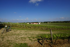 DSC04329 - Photo of Saint-Christoly-de-Blaye