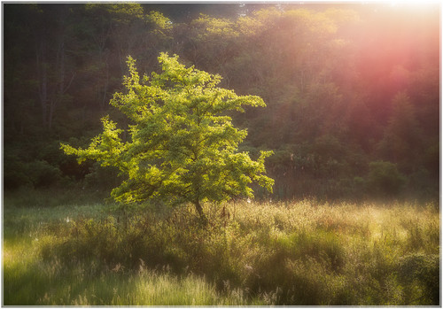 illuminate spring lensflare sunrise soft plants nature harrimanpark newyork 2016 light morning sun harrimanstatepark sunshine leaves hiking color colors green unitedstates forest landscape city stonypoint us trees tree