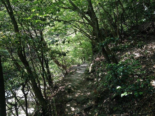 竜ヶ岳 登山道