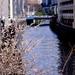 川端の春模様