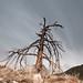 Dead End Tree