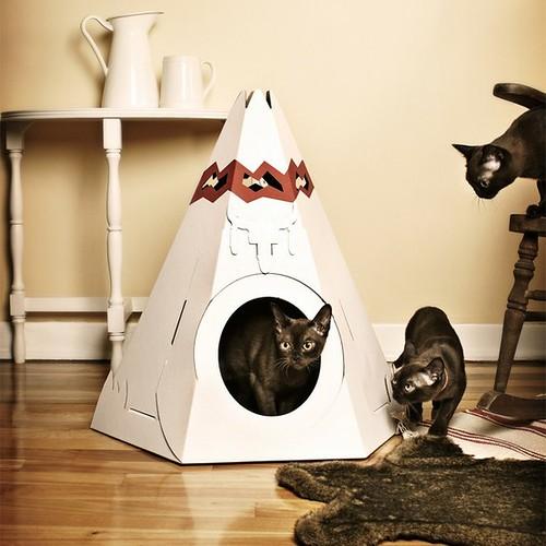 cats&cardboard_001