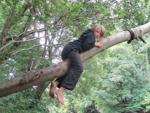 Tree Craze