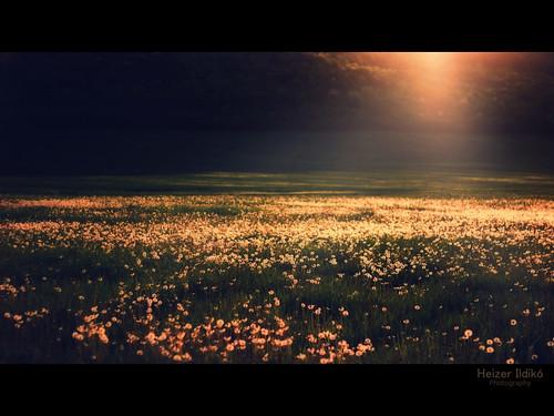 hungary este naplemente természet tavasz táj fény tájkép canon600d ringexcellence