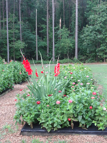 JRC Garden June 2012 (6)