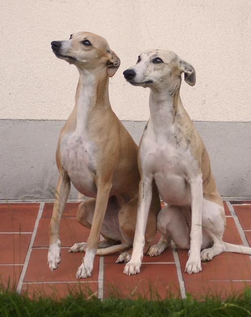 Anukis und Micra