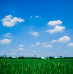 [フリー画像素材] 自然風景, 田園・農場, 空, 青空, 風景 - 台湾 ID:201207091200