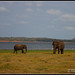 "IMG_0278_20120701 ""Minneriya Elephants"""
