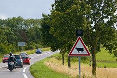 "Signalisation "" Traversé d'animal bovins """