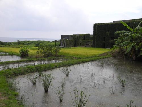 水梯田雖水稻生長期間都要有水,仍有兩次須斷水,並且要斷得徹底!