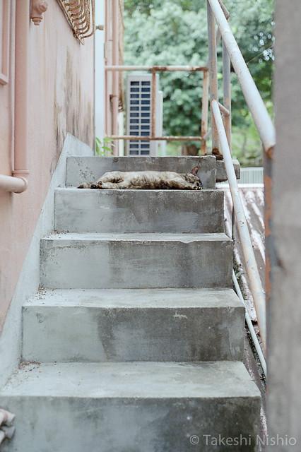階段で寝ている / Sleeping at stairs