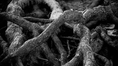 Roots by matneym