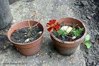 Sacrificial marigolds