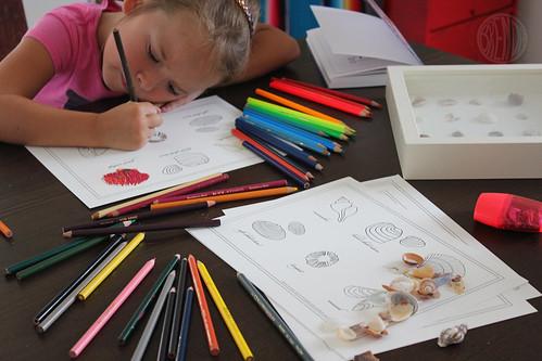 colored pencils and seashell printable coloring sheets