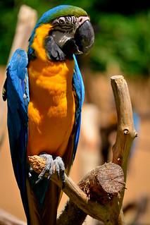 Image of インコ. zoo 動物園 tamazoo tamazoologicalpark 多摩動物園