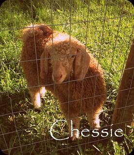 Chessie