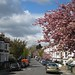 Spring blossom in Brockley