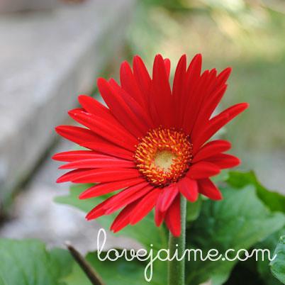 bloom1