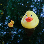 Book Festival ducks | There has been a little bit of rain.