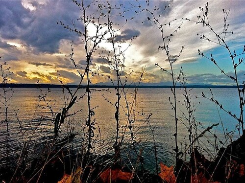 Golden Gardens iPhone Shot by Seattle Daily Photo