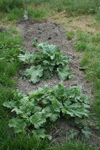 Rhubarb - 01 - 2013-12-01