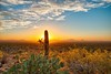 Saguaro National Park by John 70D