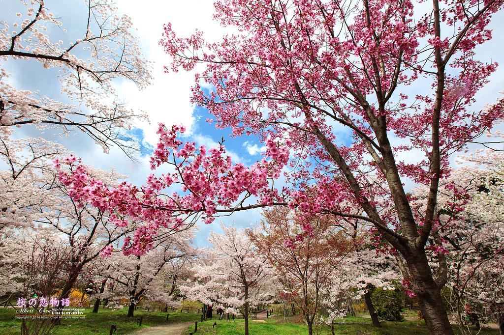 2014-04-04-12h40m35IMG_4145_1