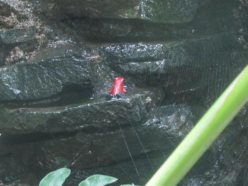 Santa Elena: les étangs à grenouilles