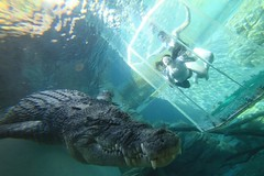 Escape Travel consultant diving with a crocodile in Darwin