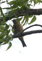 Guyana-0467