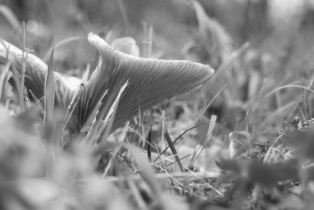 Bit more Mushroom's ARt then ........! (light box perhaps)