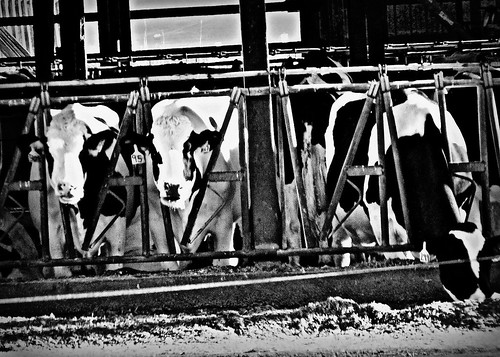 12-03-11 Black, White and Fed by roswellsgirl