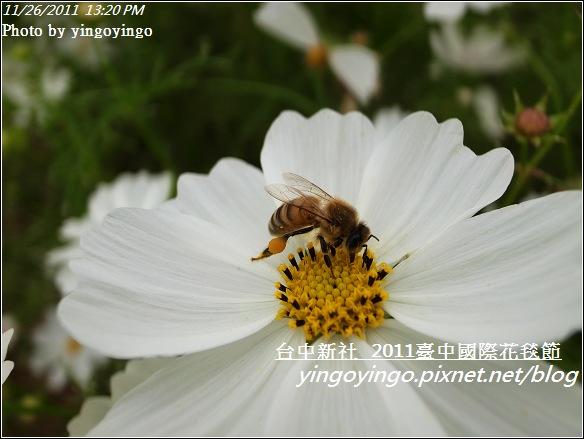 2011臺中國際花毯節20111126_R0044150