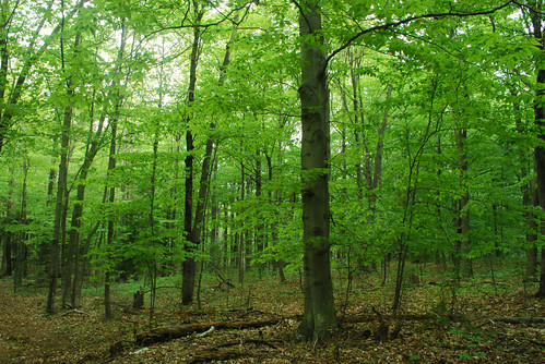 privately conserved forest in Wisconsin (by: Joshua Mayer, creative commons license)