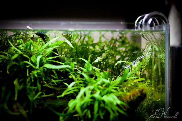 ADA Mini M Aquascape The tank after a recent clearout. A ...