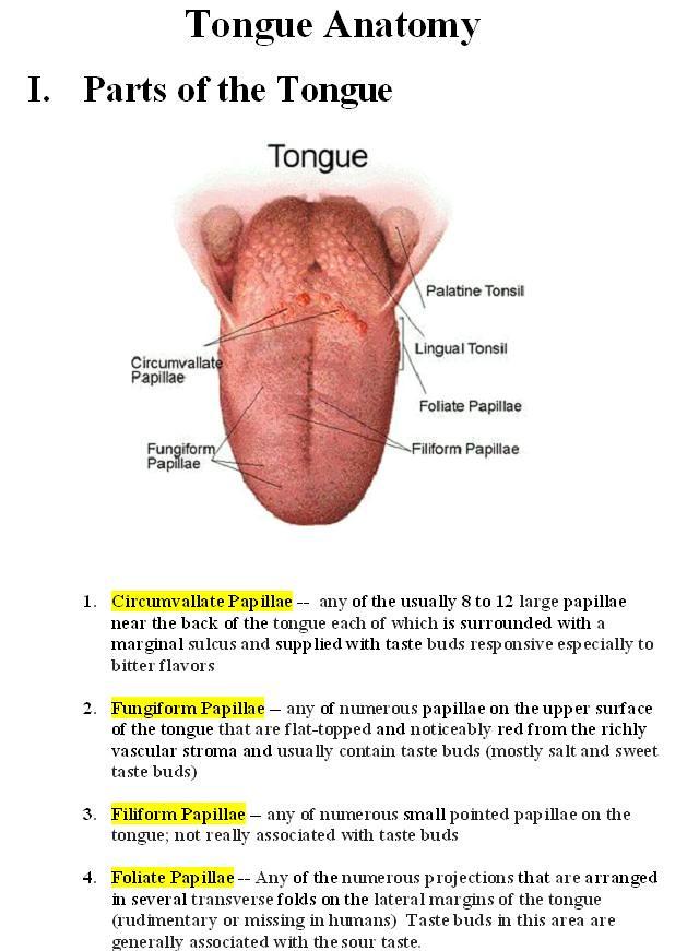 Papillae