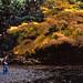 秋色の三四郎池