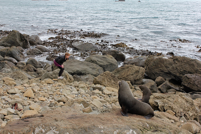 Kristen & the seals
