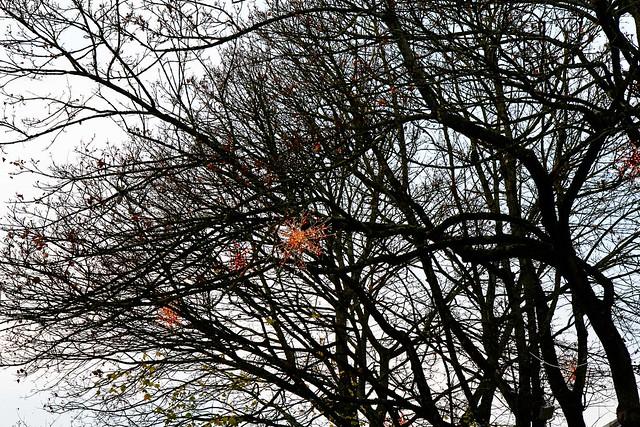 x.tree