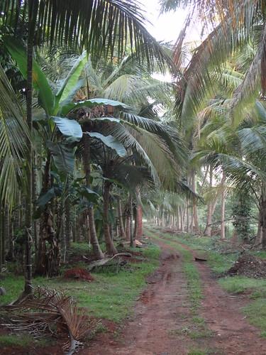 طريق في المزرعة