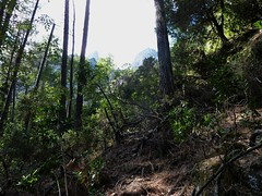 Fin de remontée du Velacu : Punta Cumpuleddu (?) et Calanca Murata