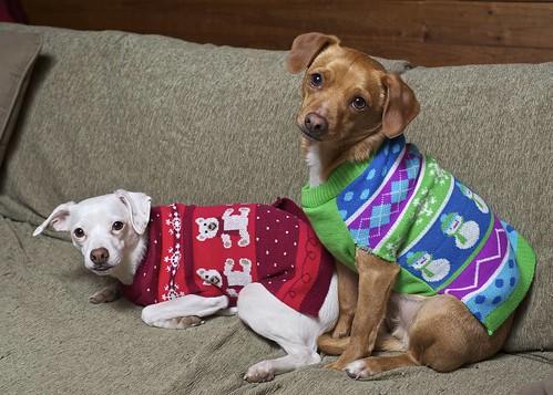 Jodi Jill Jodi Jill's 2013 review: 9 Cute Dogs Wearing Ugly ...