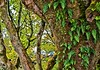 Saddell Bay, Kintyre, Argyll, Scotland - Ferns growing on a tree by Rosarian49