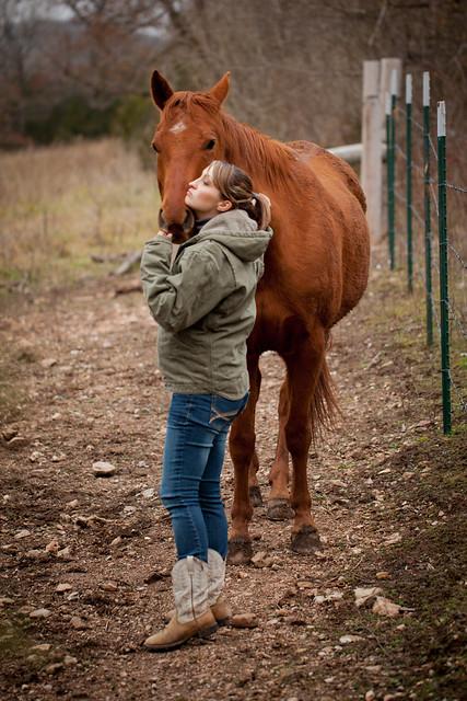Horses 9364