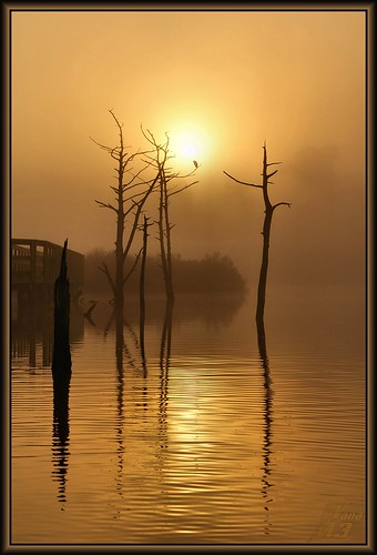 lake reflection fog sunrise golden pond texas bayou pasadena goldenmoment wanam3