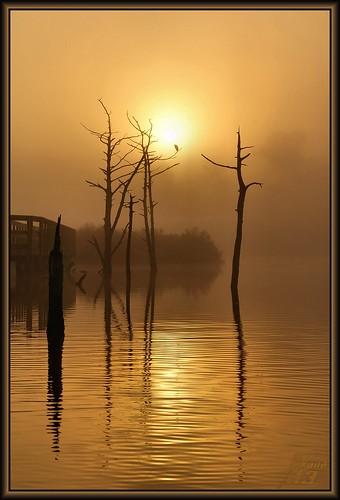 lake reflection fog sunrise golden pond texas bayou pasadena goldenmoment wanam3