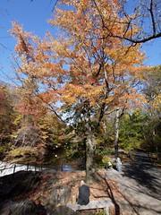 日, 2010-11-07 14:30 - New York Botanical Garden (Bronx) ブロンクスの NY植物園 紅葉