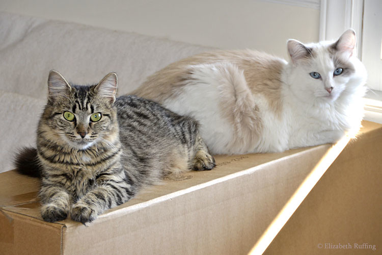 Cats sunbathing in the window photo by Elizabeth Ruffing